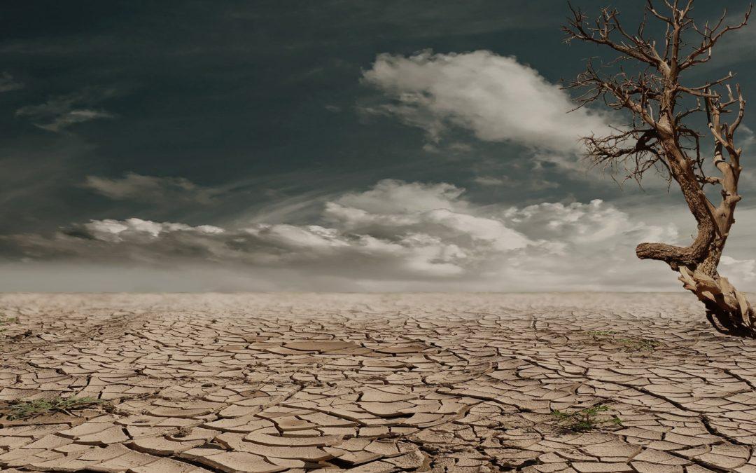 ¡Qué calor! | Las consecuencias del cambio climático